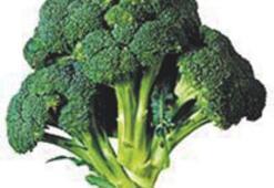 Brokoli, prostat kanserini önlemede etkili