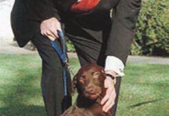 Başkanın bütün köpekleri