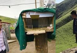 Kanatsız Kuş 9 ay sonra köyünde