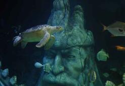 Yeşil deniz kaplumbağası Iggy yeni evinde