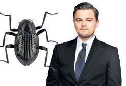 Böcekle adaş oldu