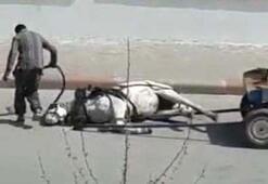 Edirnede bir adam yere düşen atını tekmeleyerek kaldırmaya çalıştı