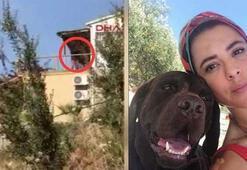 Tanem Sivarın köpeklerini zehirleyen sanığın 3 yıl hapsi istendi