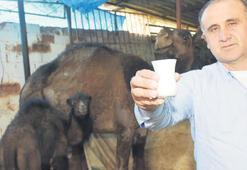 Yurtdışından deve sütüne rağbet arttı