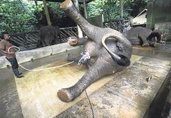 Filler sabah duşunda