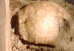 Roma mezarından 2 bin yıllık kaplumbağa kabuğu çıktı