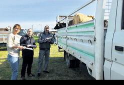 Bakanlıktan çiftçiye damızlık düve desteği