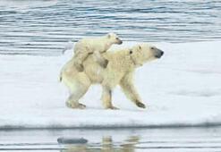 Yemek bulmak için 9 gün yüzüyorlar