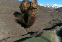 Bitliste PKKya ait 2 ton patlayıcı imha edildi
