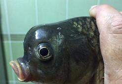 Bu balık görenleri şaşırtıyor