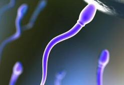 Kök hücreden insan yumurtası üretildi