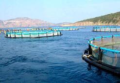 Denizin kirası düşecek balık ucuzlayacak