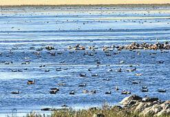 Rekor Kars'ta: Tam 40 bin kuş
