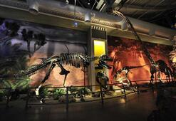Her an yanınızdan bir dinozor geçebilir