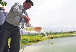 Sivrisinekle mücadelede balık krizi