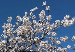 Nevruz nedir Nevruz bayramı Ne zaman kutlanır