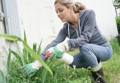 Sirkenin bahçede kullanımları