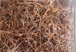 Kiraz sapının faydaları