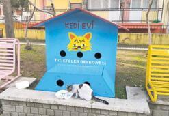 Sokak kedileri, sıcak evlerine kavuştu
