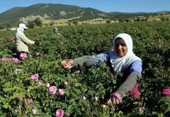 Gül, Türkiye ekonomisine yıl boyu girdi sağlıyor