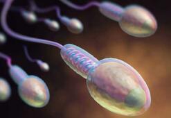 Sperm sayısının mevcut oranda azalması insanlığın sonunu getirebilir