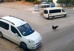 Köpeği katleden sürücünün cezası belli oldu