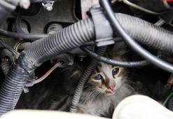 Arabanızı çalıştırırken dikkat edin