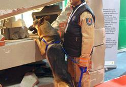 Afet İçin 3 Kurtarma Köpeği Fuarda