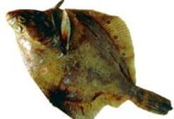 Et, balığa karşı