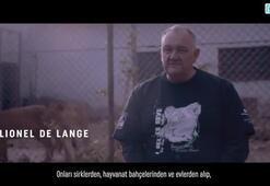 Turkish Cargo, sirk aslanlarını doğal yaşam alanlarına kavuşturdu