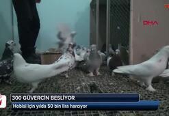 Beslediği kuşları için yılda 50 bin TL harcama yapıyor