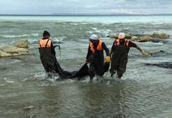 Duyarlı vatandaşın ihbarı, Van Gölü'nü kurtardı