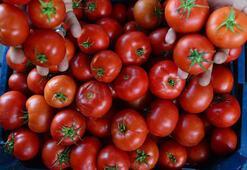Rusyaya domates ihracatı arttı