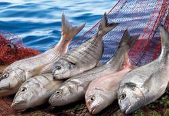 Su ürünleri ve hayvansal mamullerde 2.5 milyar dolar aşıldı