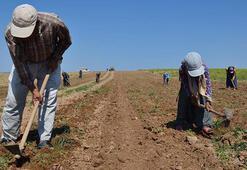 Kocaelide çiftçilere yıllık 34 milyon lira zirai gelir artışı sağlandı