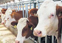 Hayvancılıkta 41 ile hibe desteği