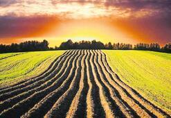 Sudan'daki tarım arazisi 50 yıl sonrasının önlemi