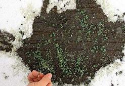 Türk kimyager kar ve buzu 20 dakika içinde çözen formül üretti