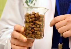Zeytin çekirdeğinden yalıtım malzemesi ürettiler