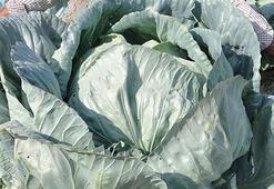 En çok lahananın fiyatı arttı