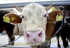Canlı hayvan ve hayvansal ürün fiyatları açıklandı