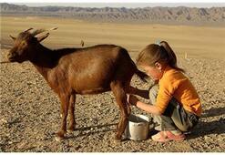 Çocuklarımıza Keçi Sütü Mü Verelim İnek Sütü Mü