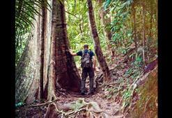 Dünyanın en uzun tropikal ağacı bulundu