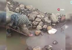 Tehlikeye aldırış etmeden kayalıklara sıkışan yılanı böyle kurtardı