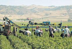 Tarımda birliği Semerat Holding kuracak