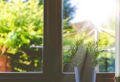 Az ışık isteyen ev bitkileri