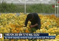 İşçi olarak başladığı seralarda bugün yurt dışına çiçek ihraç ediyor