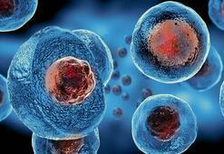 Oruç tutmanın kök hücreler üzerindeki etkisi
