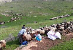 Kuduz paniği Köye giriş çıkış yasaklandı