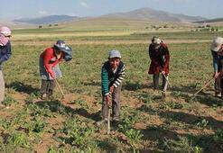 Suriyelilerin tarım sektörüne kazandırılması projesi başladı